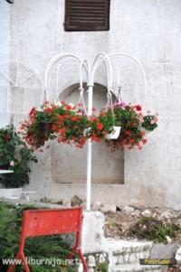 Rožice postavne na lumbrelu