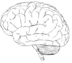 mozak_multipla