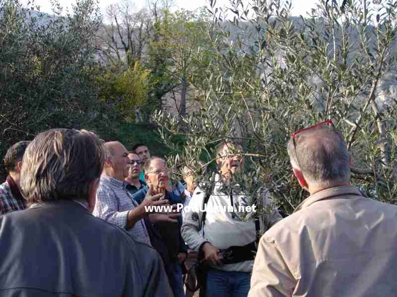 Pokazna rezidba u organizaciji udruge Agro Opatija