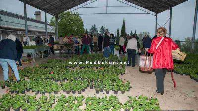 Za još ljepšu Opatiju – Ove subote grad Opatija daruje sadnice