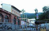 Općina Lovran sufinancira kupnju sadnica maslina, trešnji, maruna