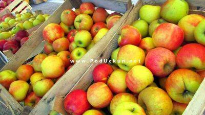 Dan domaće jabuke i meda @ Veletržnica Matulji
