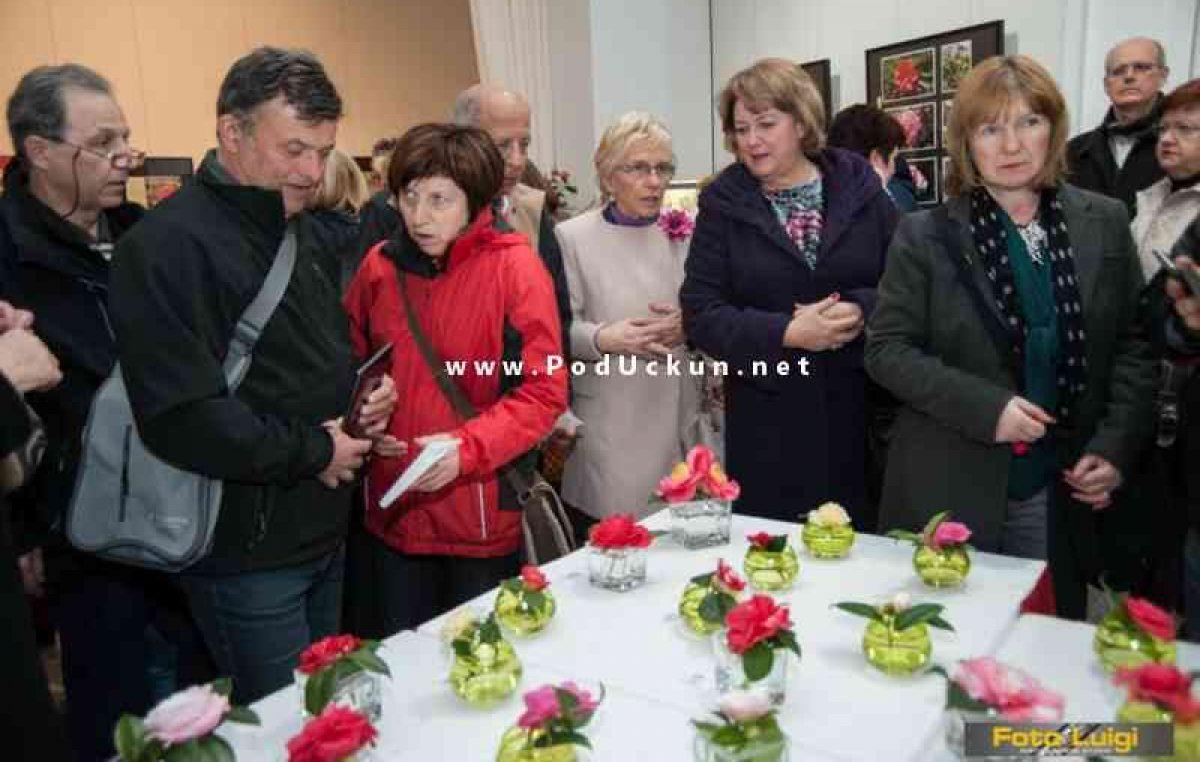 Sutra se otvara 11. izložba kamelija @ Opatija