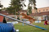 Vještina i inteligencija pasa – Ove nedjelje održava se agility natjecanje na igralištu Kantrida