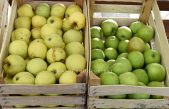 Dan domaće jabuke i meda ove subote na matuljskoj Veletržnici