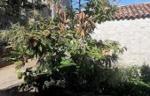 U OKU KAMERE Ludo vrijeme se igra s prirodom – U kasnu jesen procvali maruni