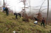 Akcija pošumljavanja 'budi BUKVAlan' – 25. rođendan Žmergo proslavio sadnjom 2.500 sadnica mlade bukve
