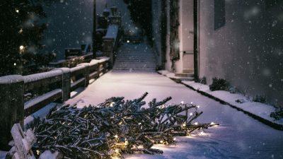 Akcija sakupljanja božićno novogodišnjih drvca traje do 22. siječnja