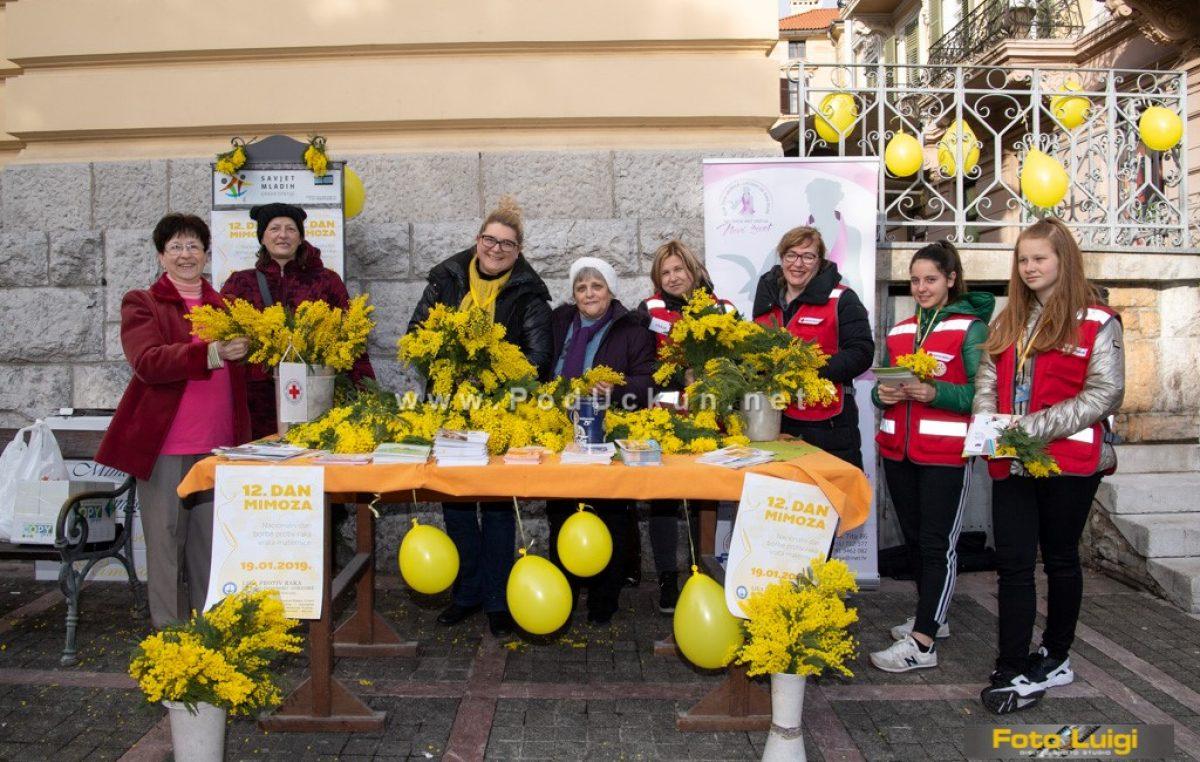 """FOTO Obilježen """"Dan mimoza"""" – Dan borbe protiv raka vrata maternice"""