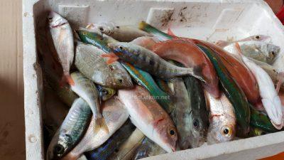 Međunarodno prvenstvo u sportskom ribolovu ovog vikenda u Opatiji