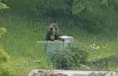 VIDEO Nesvakidašnji gost u posjeti – Mali medvjedić u điru po Mučićima