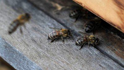 Krajem veljače u Kastvu kreće školovanje i osposobljavanje za zvanje pčelar
