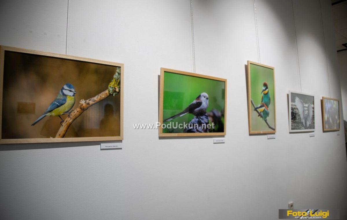 Fotograf Zoltán Makovinyi predstavio se lovranskoj publici izložbom 'Kroz moj objektiv'