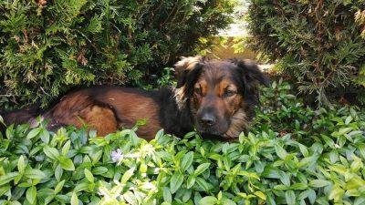 POTRAGA JE OKONČANA – Odlutao je pas Toffy, vlasnica moli za pomoć @ Pobri