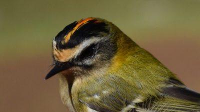 Tradicionalni ornitološki kamp održat održava se od 18. kolovoza do 4. listopada @ Park prirode Učka