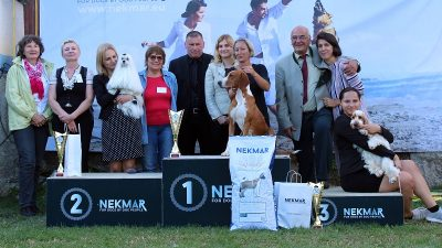 U OKU KAMERE 276 pasa iz 11 država predstavilo se na Nacionalnoj izložbi pasa u Lovranu