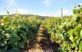 """Vina Kvarnera u Sloveniji"" – Uspješna virtualna degustacija i promocija kvarnerskih vinskih sorti"