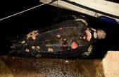 Ogromna kornjača u luci šokirala Opatijce – Uginula životinja plijenila pažnju ljudi