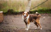 Vijeće dopunilo odluku o izradi Prostornog plana: Treba pronaći i lokaciju za sklonište za nezbrinute životinje