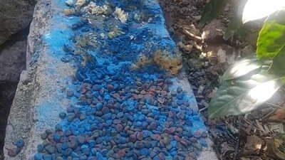 Modrom galicom truju napuštene životinje, obaviještena i policija @ Kastav