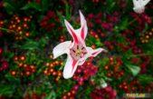 Podjela sadnica cvijeća iznajmljivačima obiteljskog smještaja naredni tjedan u Vrtlariji Terra @ Kastav