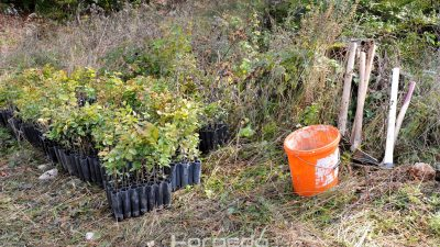 """U okviru projekta """"Stablo uspomena"""" na Učki je posađeno čak 3000 mladih sadnica bukve"""