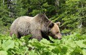 Nature&wildlife nagradne igre – prilika za istraživače, crtače i kreativce!