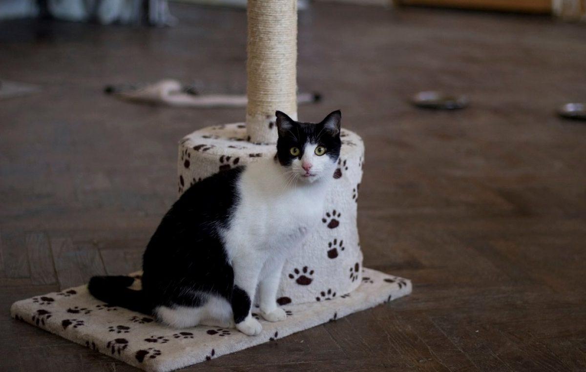 Akcija sterilizacije mačaka s 50% popusta traje do kraja veljače