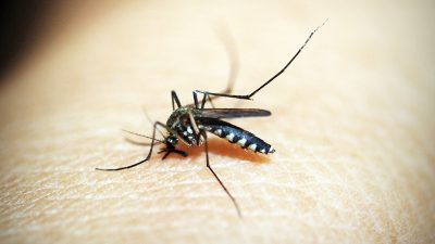Zaprašivanje komaraca u Kastvu
