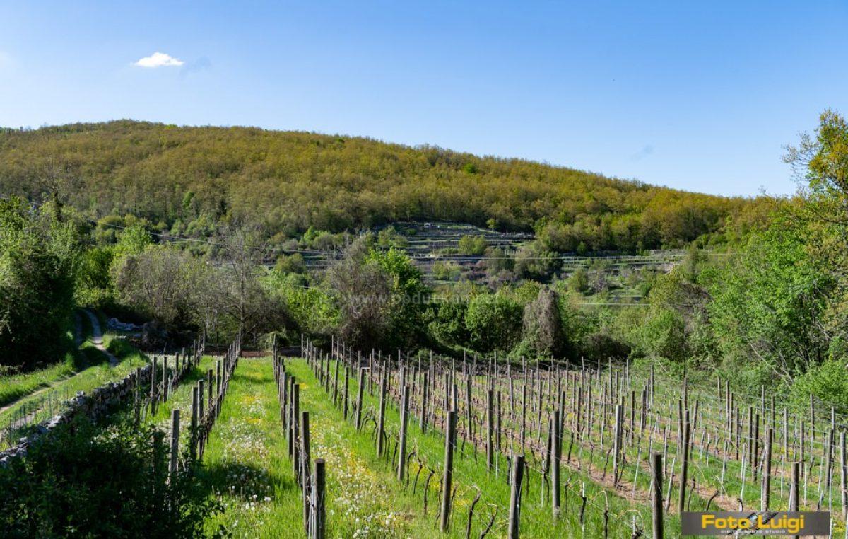 Kako živeti na našim lešicama – Radionica za male poljoprivrednike ovog petka u Veprincu