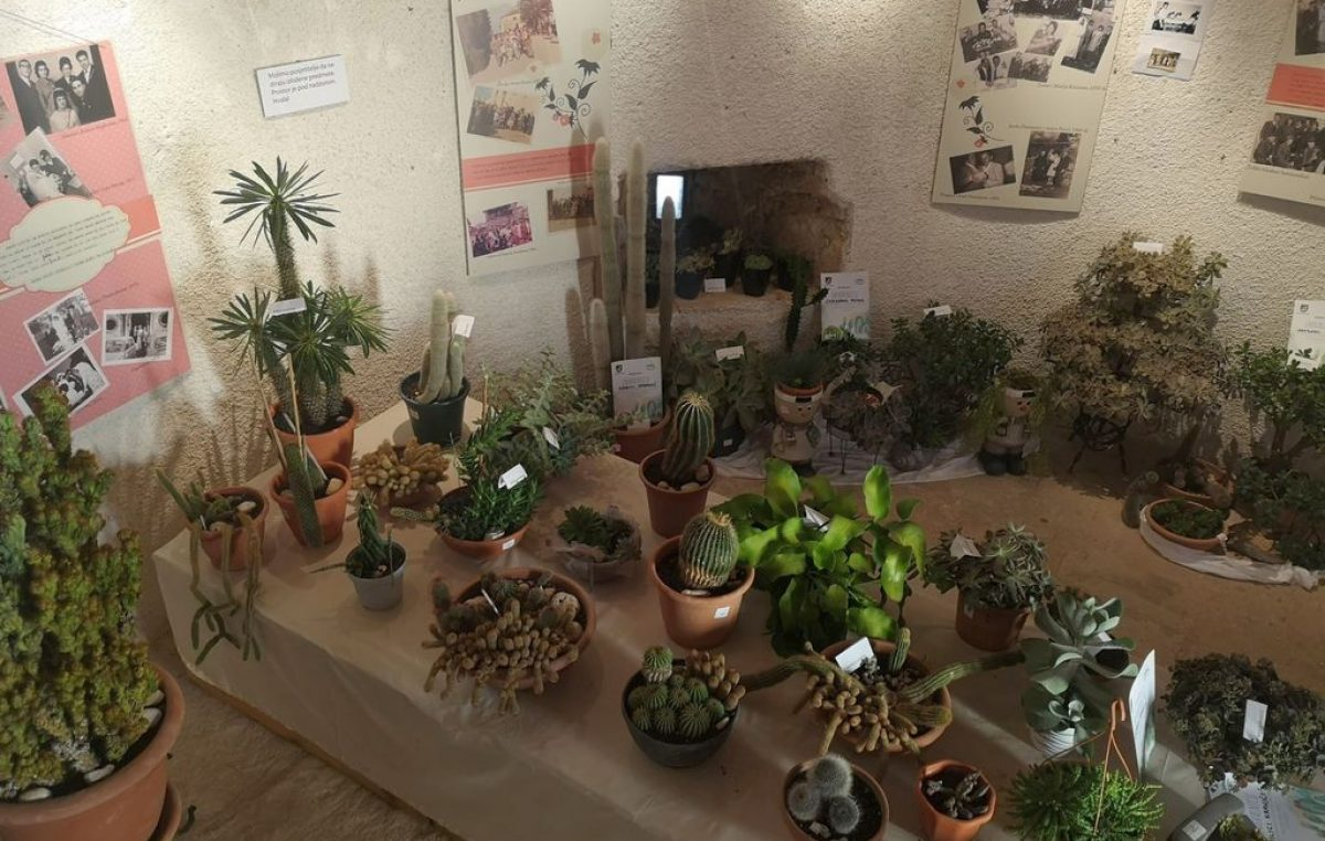 [FOTO] Na 'Bodljikavim danima u Žminju' izloženo 260 kaktusa i sukulenata iz cijele Istre