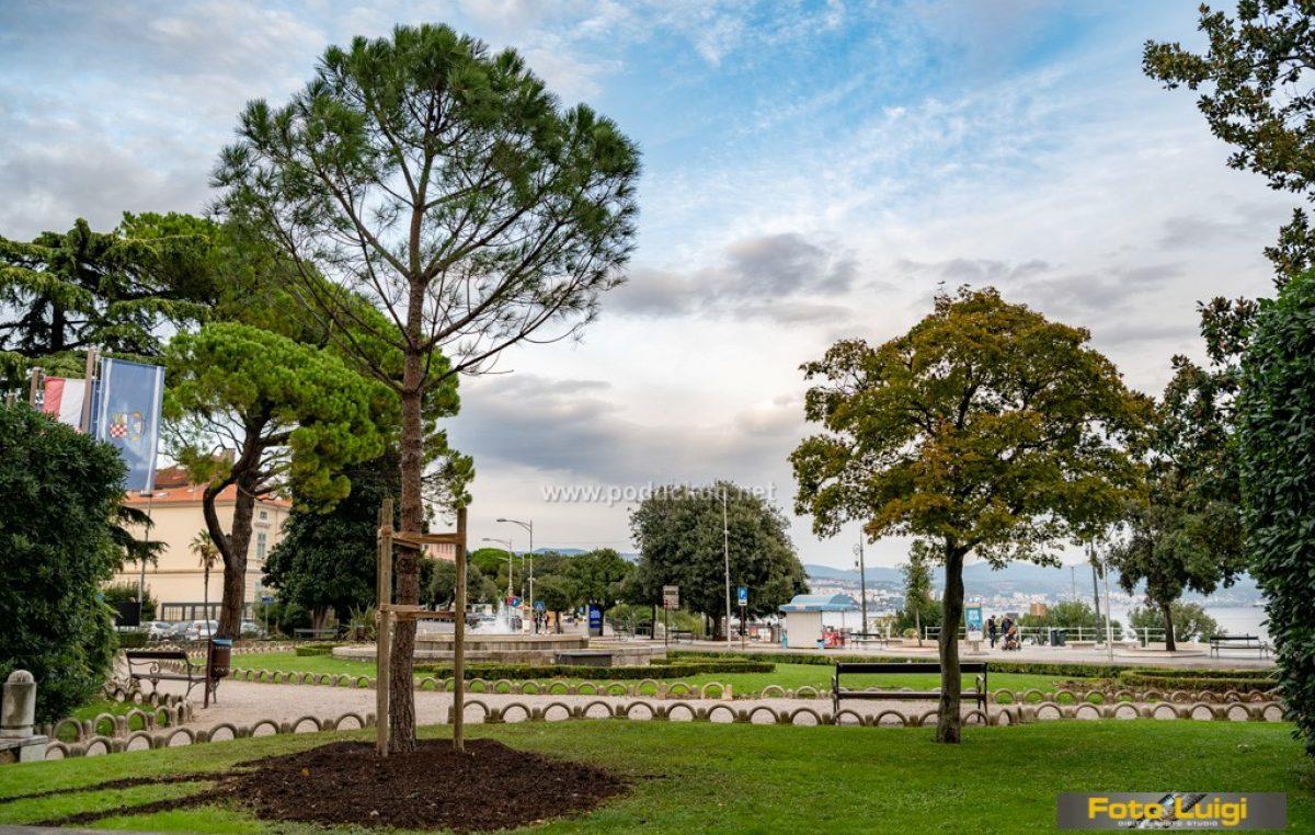 [U OKU KAMERE] Pinija ponovo na starom mjestu – Brojno stanje zelenila u parku na Slatini ponovo 'na nuli'